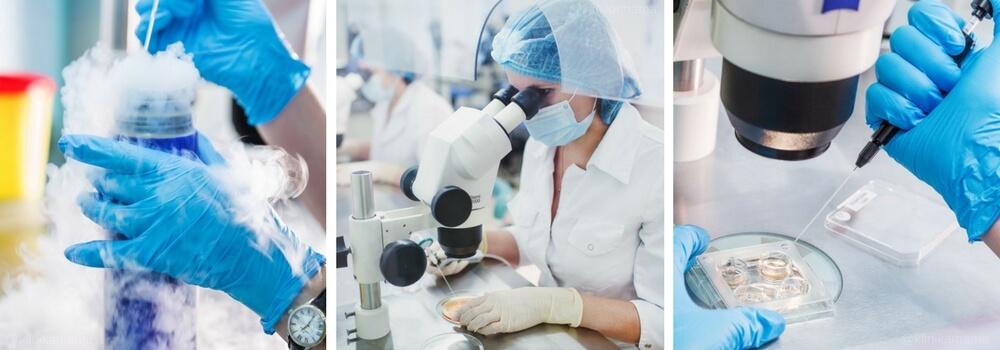 Эмбриология Клиники МАМА